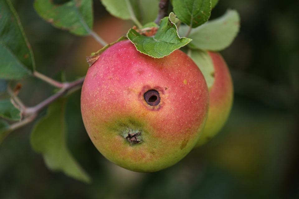 apple-3636023_1920
